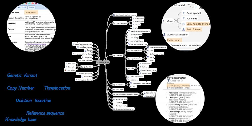 Primi modelli di dati genomici strutturati secondo il formalismo openEHR