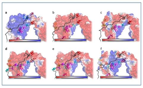 Modellazione molecolare di sistemi biologici per applicazioni mediche e farmaceutiche