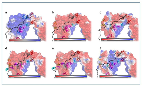 Molecular modeling of biological systems for medical and pharmaceutical applications: molecular modeling of the onset of autoimmune diseases