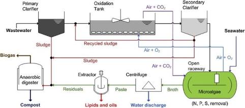 Modelli matematici della crescita delle microalghe in fotobioreattori per la cattura di CO2 e la produzione di biomolecole