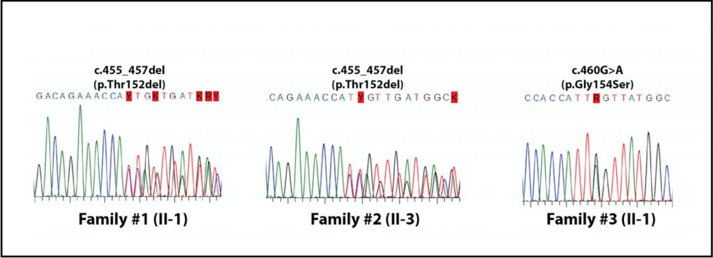 Sequenziamento su larga scala e analisi dei dati genomici
